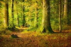 Ln10166210-Wald im Sonnenlicht - Forest in sunlight