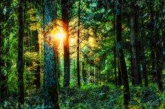 Ln10221210-Sommerwald - Summerforest