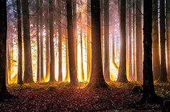 Ln10809211-Goldener Herbstwald