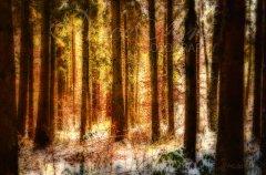 Ln11135212-Märchenhafter Winterwald