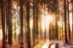 Ln11141212-Winterweg zur Sonne