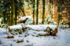 Ln11826301-Stille im Winterwald