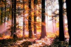 Ln18765209-Goldener Wald