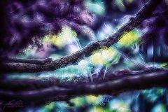 Bn19282405-Wacholderzweige - Juniperus