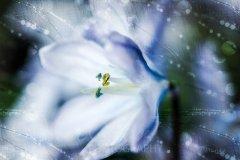 Fn16735402-Weisse Blüte im Glitzerlicht