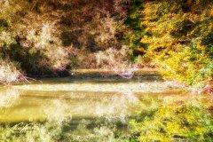 Ln102783809-Kleiner Teich im goldenen Sonnenlicht
