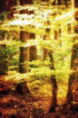 Ln102786809-Kleiner Baum im goldenen Sonnenschein