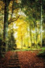 Ln103669910-Holztreppe im Wald