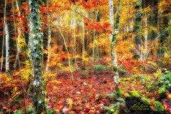 Ln103765911-Junger Wald im Herbst