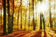 Ln104098911-Herbstwald im Sonnenschein
