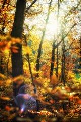 Ln104161911-Herbstwald mit Sonnenflares