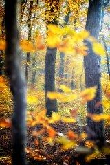 Ln104164911-Herbststimmung im Wald
