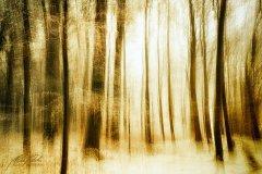 Ln104571902-Verschneiter Wald abstrakt