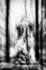 Ln104607902-Verschneite Tannenbäume - abstrakt