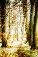 Ln104614902-Waldweg zum Licht