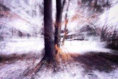 Ln104632902-Winterlicher Baum mit Holzzaun abstrakt